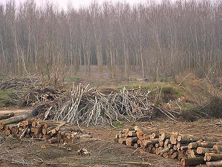 Destruida la colonia de cigüeñas de Alija de la Ribera